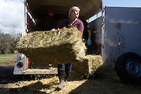 Alexis Blakey, age 19, from Oso, Wash. unloads one of 70 bales of hay donated and trucked from Bellingham, Wash., for the horses remaining on Summer Raffo's farm in Oso, Wash. on April 1, 2014.  Blakey was a friend of Raffo and headed to her farm past roadblocks as soon as she heard Raffo was missing.  She has been caring for the horses daily since.  The hay bales were donated from Laurel Farm and Western Supply and driven to Oso, Wash. by Chelsea Judge from Bellingham, WA and and Lynn Johnson from Ferndale, Wash.