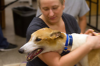 Kate Janczak hugs Chewy shortly after he arrived in the early morning hours at Greyhound Pets in Woodinville, Wash. on Sunday, June 21,2015.
