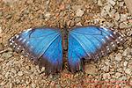 Butterfly World Project Ltd