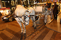 A horse and carriage ride from Sealth Horse Carriage operated by (photo &copy; Karen Ducey Photography) &ldquo;It was excellent!&rdquo; said Bill Strand and Sherry Evans Bonney lake, WA<br /> <br /> Kim Jarvis from Kirkland said about a previous ride &ldquo;it was so beautiful.&rdquo;  Its like you&rsquo;re wrapped in holiday spirit. The blanket snuggled in with loved oneslooking at all the lights.  Its just like you&rsquo;re living a real life Christmas carol.<br /> <br /> Horse is clomping down the big city street.   It&rsquo;s a holiday setting.<br /> <br /> This is the center of our holiday city day.  They also went on the ferris wheel, had dinner at the Space Needle, and went ice skating.