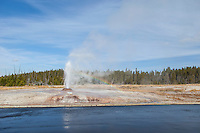 Pink Cone Geyser in Yellowstone National Park
