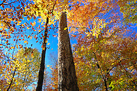 """Goll Woods is the least disturbed woodland known to remain in extreme northwestern Ohio. The the """"Black Swamp"""" forest which once covered a vast area of the flat post-glacial lake plains southwest of Lake Erie."""