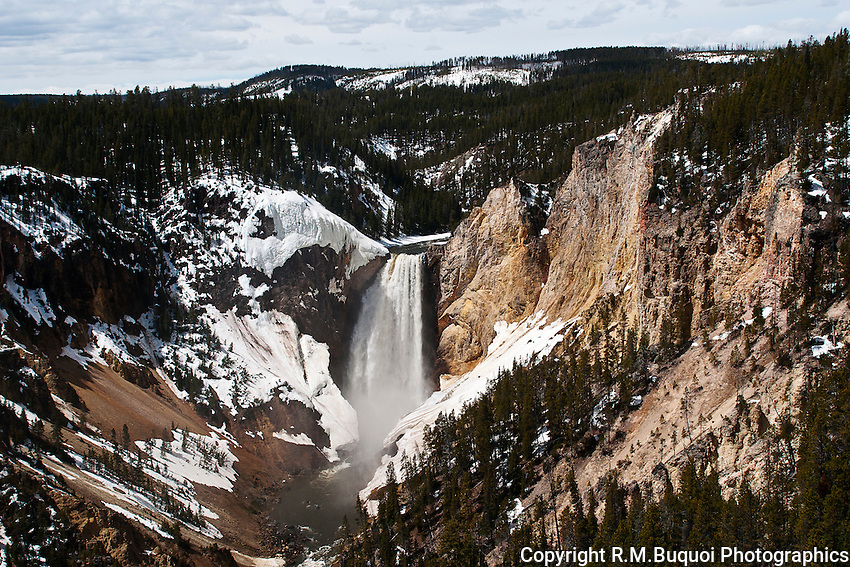 Lower Falls in spring in Yellowstone National Park