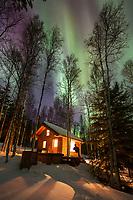 Log cabin in boreal forest in Fairbanks, Alaska.