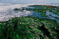 Tidepools with eel grass, California, Pacific Ocean