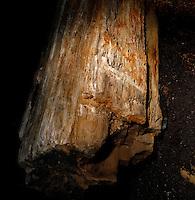 Plant History Glasshouse (formerly Australian Glasshouse), 1830s, Rohault de Fleury, Jardin des Plantes, Museum National d'Histoire Naturelle, Paris, France. Detail of mineralized tree trunk.
