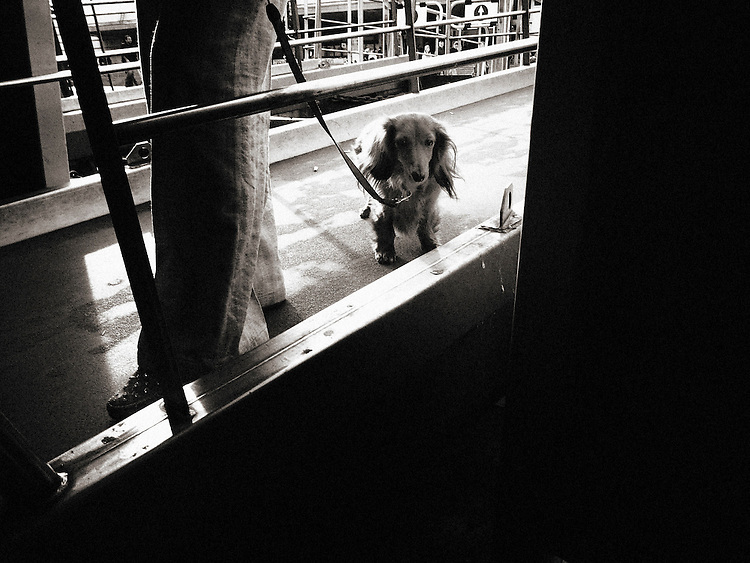 Italy, Venice, Street photography, dog