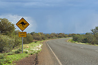 Road sign in the Australian Outback warning drivers to be vigilant against possible kangaroo encounters.  This sign has been defaced slightly to show a kangaroo skiing...