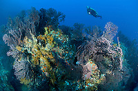 Diver at West Wall<br /> Grenadines