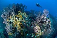 Grenadines Underwater