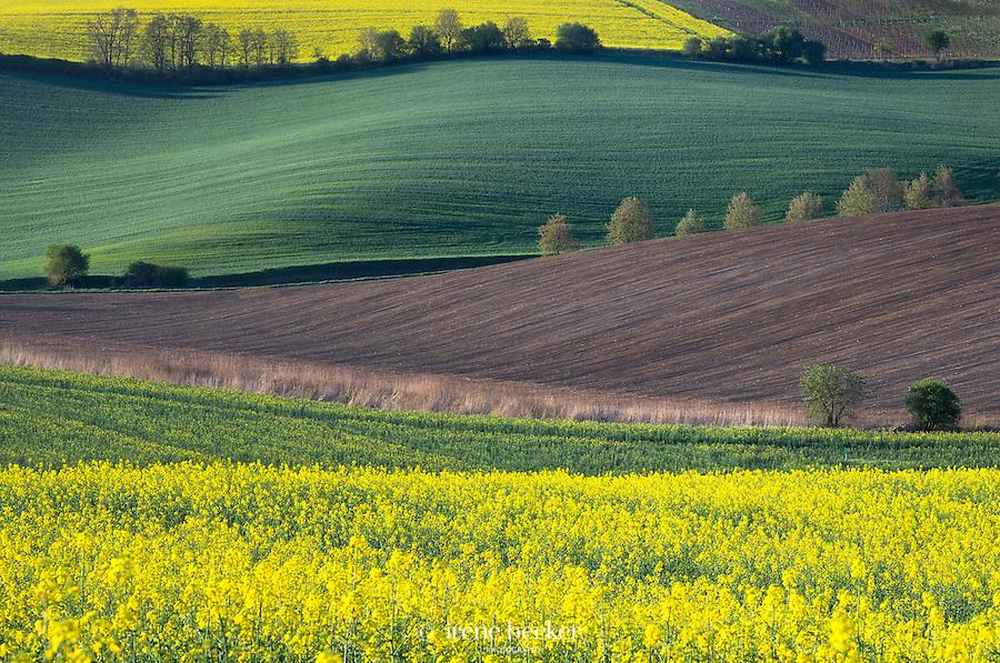 Springtime<br /> Landscape near town of Jihomoravsk&yacute; at afternoon light, Moravia, Czech Republic.