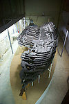 Ship From 300 BC, Girne Castle
