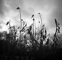 Winter Decay | Black and White Photography