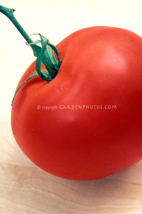 Red ripe tomato picked, old antique heirloom variety Abe Lincoln