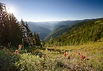 Idaho, North, Wallace, Avery. Morning overlooking the valley cut by the North Fork of the St. Joe River in summer as viewed from near the top of Moon Pass in the St. Joe National Forest.