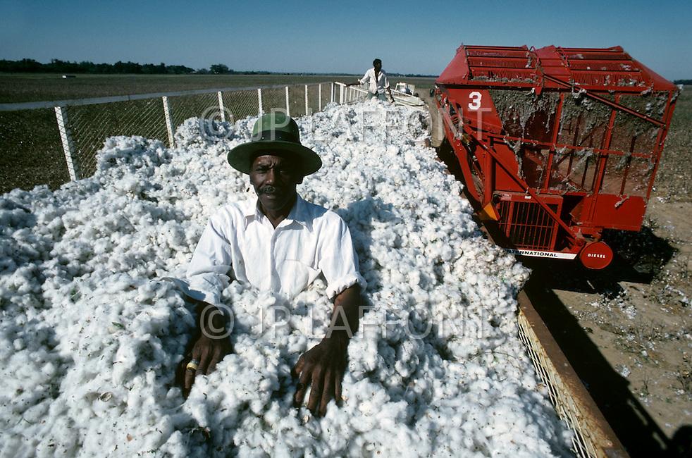 Mississippi, USA, September, 1978. Agriculture - cotton picking.