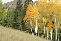 fall colors in Empire Canyon