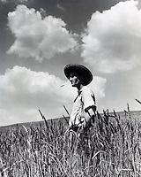 Farmer gazing over field of wheat. 1950's.