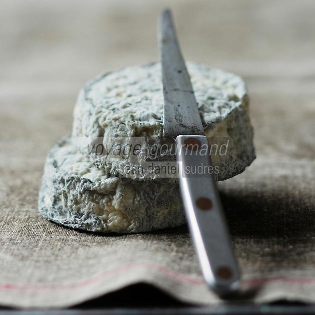 Europe/France/Centre/41/Loir-et-Cher/Sologne/Selles-sur-Cher: Fromage de Chêvre AOP Selles-sur-cher //  France, Loir et Cher, Sologne, Selles sur Cher, Chevre PDO Cheese Selles sur cher