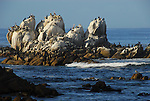 rocks near Hopkins Marine Lab in Monterey