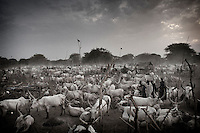 South Sudan. 23 March 2011...A Dinka cattle camp near the Nile, in the central area of Souther Sudan..