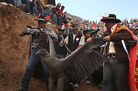 A wild condor is held by its wings as it is paraded around the bullring during the Yawar Fiesta in Coyllurqui in the Peruvian Andes on Independence Day. This celebration symbolises the clash between the indigenous people (represented by the condor) and the Spanish (represented by a bull). The condor is paraded around town, strapped on top of the bull, given alcohol, and finally set free.