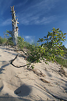 Dead Tree, Live Vegetation and Grasses in Dunes at Pinery Provincial Park, Ontario, Canada
