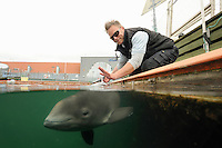 Harbor Porpoise (Phocoena phocoena) research training, Fjord & Baelt, Denmark