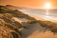 Sunset over remote coastline with sand dunes, pingao and marram grass near Paturau on west coast of South Island, Nelson Region, New Zealand, NZ