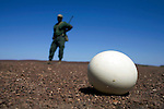 KUNENE, NAMIBIA - APRIL 28: An unidentified park ranger stands in the desert with his rifle watching a deserted Ostrich egg on April 28, 2008 in Kunene, Namibia. He participated in a 2-week survey with a walking safari with camels and a crew through 155 miles of proposed parkland through the savanna at Etosha National park, through rocky badlands, across the world's oldest desert, the Namib and the blinding dunes and fogy cliffs at Skeleton Coast on the Atlantic Ocean. One of the missions was to track the black Rhinoceros who is now brought back from certain extinction, and more than one hundred fifty of them roam free in this remote area. (Photo by Per-Anders Pettersson)...