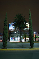 Nocturnal urban landscape with palm tree and poplar trees and bilboard. Night Bike Ride with Adrian Mealand, Kurt Holander and Mike Smith, Mexico City, Mother´s Day, May 10, 2007