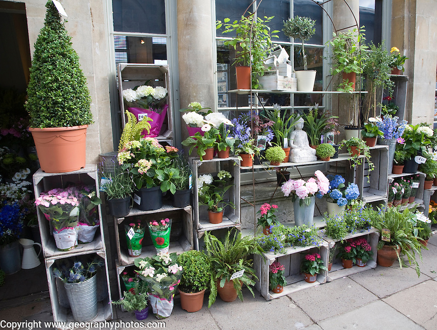 Plant and flower shop display on Pulteney Bridge, Bath, Somerset, England