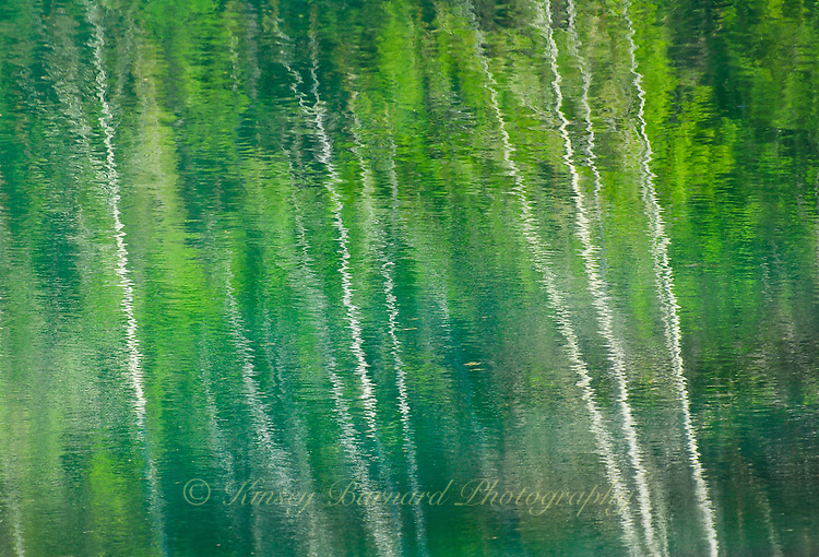 """ASPEN SPRING"" ORIGINAL 24 X 36 GALLERY WRAPPED CANVAS SIGNED BY THE ARTIST $2,500. CONTACT FOR AVAILABILITY."