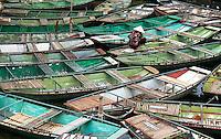 Congregation of many small local Boats at Ninh Binh, Vietnam