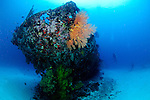 "The coral encrusted stern of the ""cross wreck"", a Japanese coaster sunk in WW2. Manokwari, West Papua"