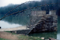 WATER DROPS IN NATURE<br /> Dew Drops On Spider's Web<br /> The oxygen end of water has a negative charge and the hydrogen end has a positive charge. The hydrogens of one molecule are attracted to the oxygens from other molecules. This attractive force is called cohesion.