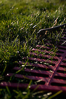 Yardwork maintenance for the middle class home, close up of rakes lying in the grass.