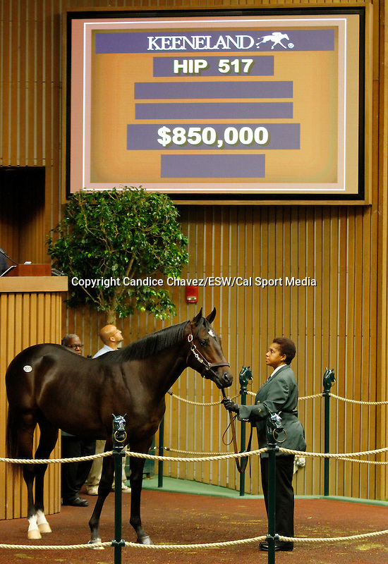 September 16, 2015: Hip 517 Medaglia d'oro - Poof Too colt consigned by Taylor Made Sales.  Candice Chavez/ESW/CSM