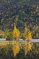 Autumn colors along the Knik river, southcentral, Alaska