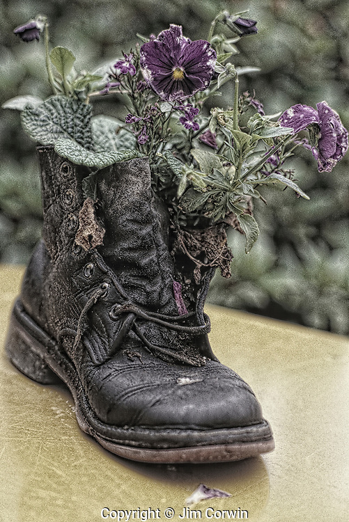 Flowers in old shoe at the Country Village with shops and cafes Bothell Washington State USA