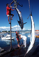 Marlin Fishermen at Cabo San Lucas