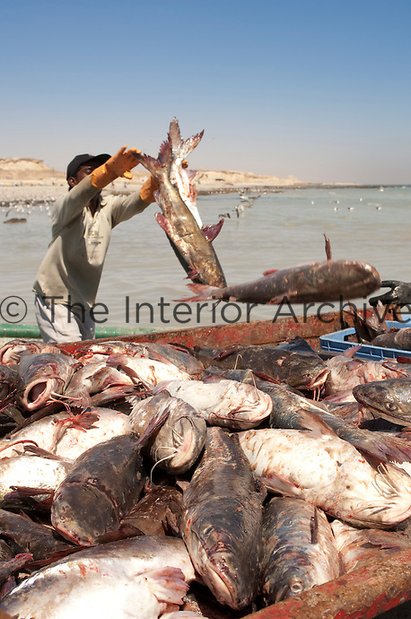 A fisherman throws his catch into a container on the seashore