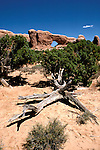 Utah: Arches National Park, South Window Arch, utarch103     .Photo copyright Lee Foster, www.fostertravel.com, 510/549-2202,  lee@fostertravel.com