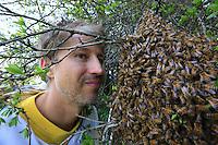 A beekeeper face to face with a swarm of bees.///Face à face entre un essaim d'abeilles et un apiculteur.