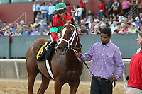 HOT SPRINGS, AR - MARCH 18: Malagacy #6, ridden by Javier Castellano after winning the Rebel Stakes race at Oaklawn Park on March 18, 2017 in Hot Springs, Arkansas. (Photo by Justin Manning/Eclipse Sportswire/Getty Images)