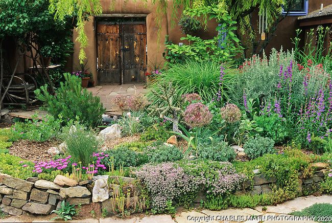 Joan Brink of Santa Fe, New Mexico, created a beautiful and baroque xeriscape section in her garden which features such drought tolerant plants as cholla cactus, sedums, salvias, penstemon, iceplant, and ornamental onion.