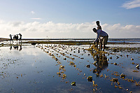 A seaweed farm in Liwagao, Caluya. As with all of the Caluya islands Typhoon Yolanda (Haiyan) destroyed and washed away many of the seaweed crops. As this is the main livelihood here it causes a lot of problems for the locals.