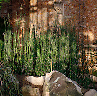 Plant History Glasshouse (formerly the Australian Glasshouse) built in the 1830s by Charles Rohault de Fleury, Jardin des Plantes, Museum National d'Histoire Naturelle, Paris, France. Detail of Equisetum myriochaetum plants. This image finds its depth of field in the play of light and shadows, in the rocks in the foreground and in the corbel on the wall behind the plants.