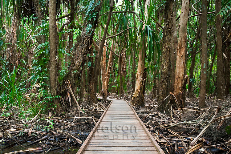 Melaleuca wetlands boardwalk at Centenary Lakes.  Cairns, Queensland, Australia
