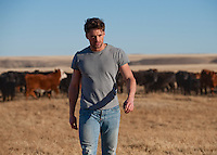 Man walking away from a herd of cattle